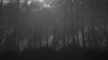 fundo místico de halloween com floresta escura e neblina video