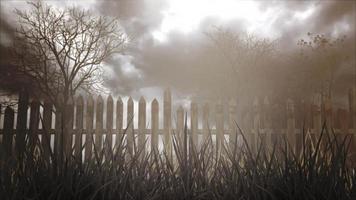 fundo místico de halloween com floresta escura e nevoeiro. feriado do dia das bruxas, pano de fundo abstrato video