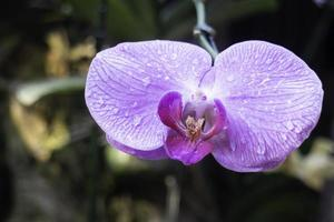 Orchid plant in the garden photo