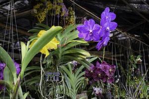 Plants at a nursery