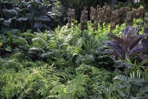 Lush garden with plants