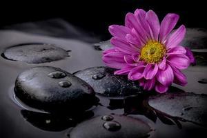 flor morada sobre piedras negras y agua foto