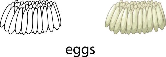 Eggs of mosquito in colour and doodle vector