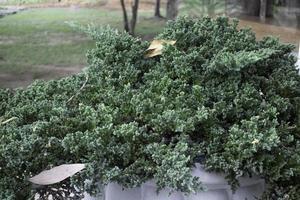 planta verde afuera