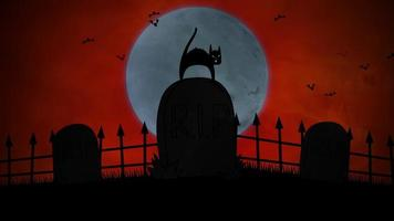 animation de fond halloween avec le chat sur la tombe video