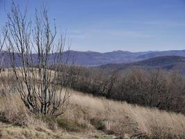 Landscape of bare trees in a field with Bieszczady Mountains in the background in Poland photo