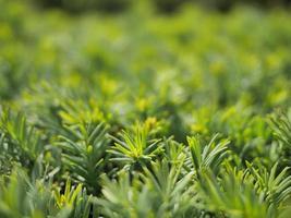 Close-up de pequeñas plantas verdes o arbustos. foto