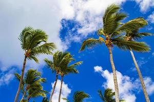 fuertes vientos mecen palmeras