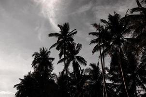 palmeras en la noche foto