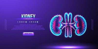 kidney, human anatomy, low poly wireframe vector illustration