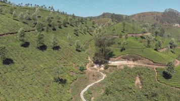 trilhas de terra que cruzam os jardins de chá em uma encosta íngreme nas colinas munnar, na Índia - órbita panorâmica aérea de baixo ângulo video