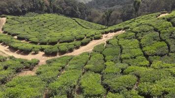 vista da plantação de jardins de chá munnar cobrindo as exuberantes colinas verdes, na Índia - ascensão aérea inclinar para cima revelar foto video