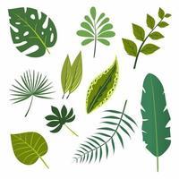 Conjunto de elementos de diseño vectorial colección de hojas de bosque verde. helecho, hoja de plátano, palma monstera, vegetación tropical, follaje artístico, hojas naturales en estilo colorido. belleza decorativa elegante ilustración vector