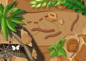 Top view of different types of insect in the garden vector
