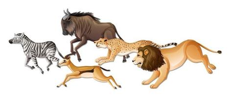 Group of wild African animals on white background vector