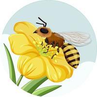 Abeja en flor amarilla sobre fondo blanco. vector