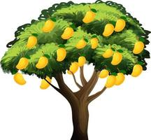 Yellow mango tree isolated on white background vector
