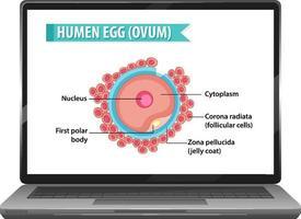 Human egg on notebook desktop vector