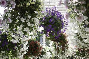 Plants in hanging baskets photo