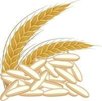 Granos de arroz simple sobre fondo blanco. vector