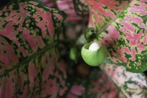 Close up of budding plant photo