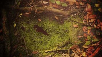 fundo de terror místico com sangue escuro na floresta e câmera panorâmica