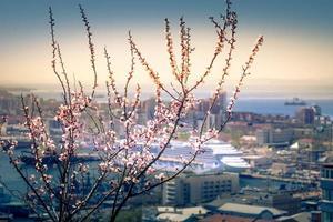 Flores de cerezo en ramas con paisaje urbano borroso en el fondo en Vladivostok, Rusia foto