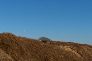paisaje natural con un árbol en una colina marrón en vladivostok, rusia foto