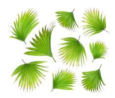 Hoja de palma verde aislada en blanco para el fondo de verano foto