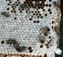 Close up of a bees nest