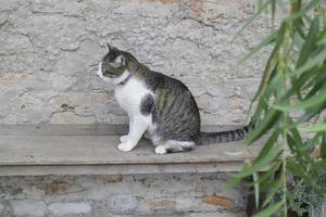 Domestic cat sitting outside