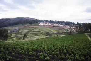 terrazas agrícolas en cusco foto