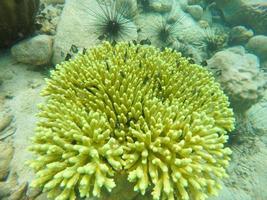 vista de un arrecife de coral foto