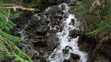ver cenas de cachoeira na floresta, parque nacional dombai, cáucaso, rússia