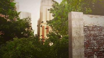 panorama van stadslandschap met veel grote gebouwen en park in zomerdag video