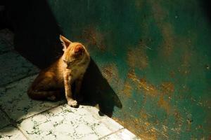 gatito naranja soñoliento en el callejón foto