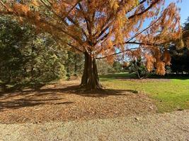 Beautiful fall day photo