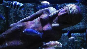 acuario y estatuas de egipto video