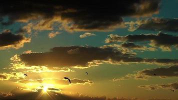 gaivotas e o pôr do sol
