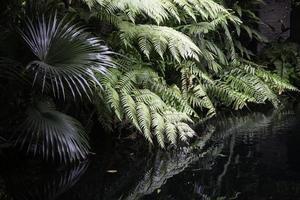 Green jungle plants