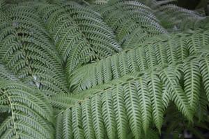planta de helecho verde