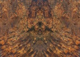 Natural Burma padauk burl wood striped wooden texture background photo