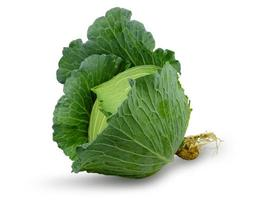 Fresh green cabbage with a root isolated on a white background photo