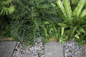 plantas en el jardin