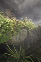 Stream of water with green plants and mist