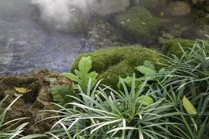 Streams and green plants with mist