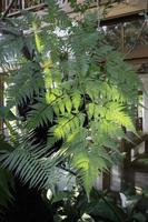 Fern outside as decoration photo