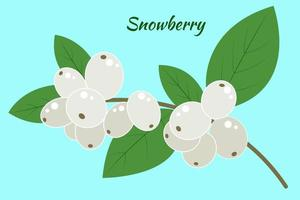 A branch of a snow berry on a blue background. Symphoricarpos with leaves, vector. Isolated object. vector