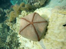 Starfish in the water photo