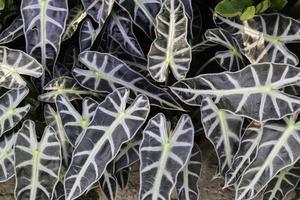 Beautiful plants in the garden photo